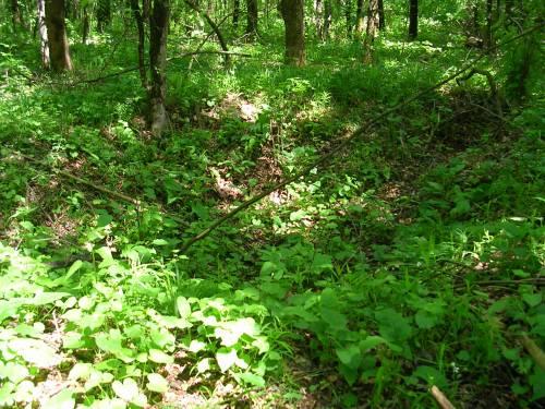 Окопы в лесу под с. Сторожевое